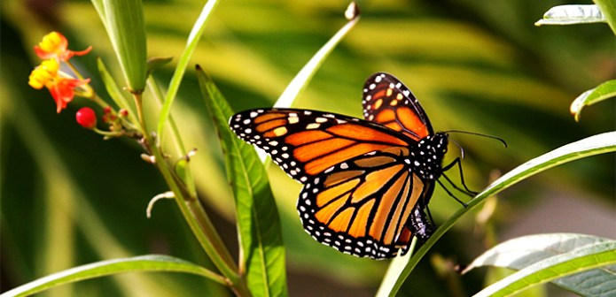 Resultado de imagen de la Reserva de la Biósfera Mariposa Monarca