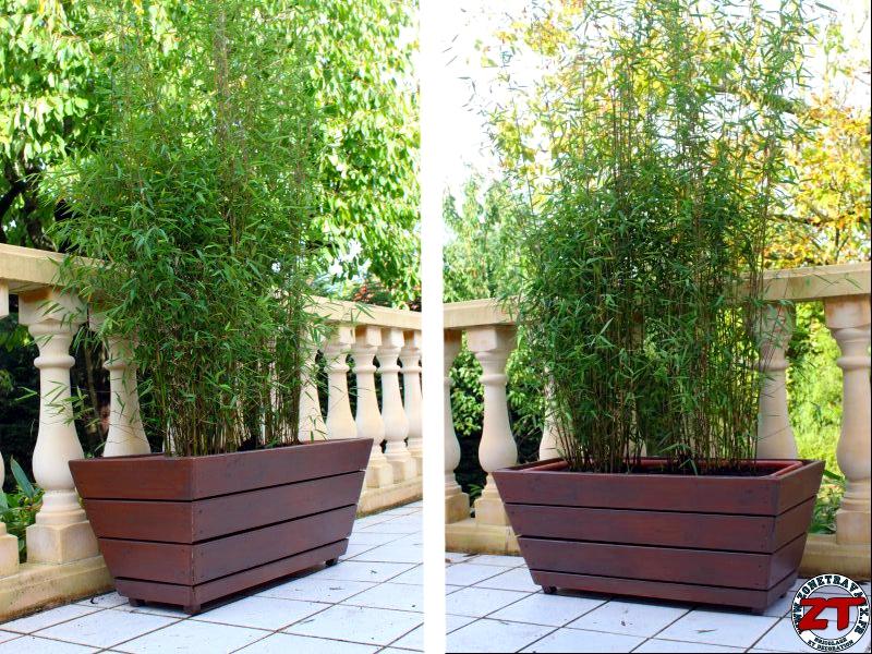 jardin rempoter une plante bambou. Black Bedroom Furniture Sets. Home Design Ideas
