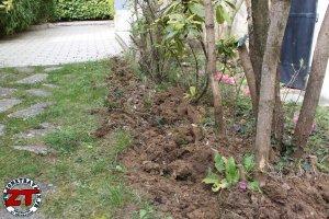 Installer bordure de jardin (7)