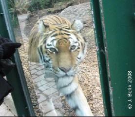 Tigermama Tanja, 25. Dez 2008