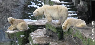 Mama Olinka mit Arktos & Nanuq, 16. Januar 2009