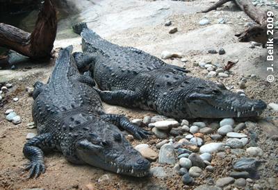 Peubla (links) und DUrango, 3. April 2009