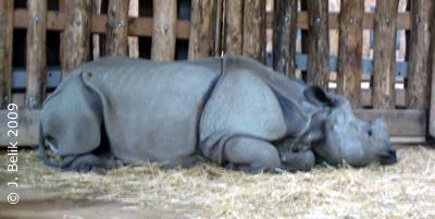 Sundari, 15. Mai 2009