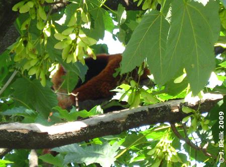 Suchrätsel: Wer oder was versteckt sich hoch oben im Baum?