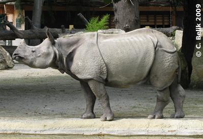 Sundari beim Posen, 28. Juli 2009