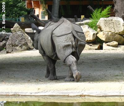 Und weg war sie. Sundari, 28. Juli 2009