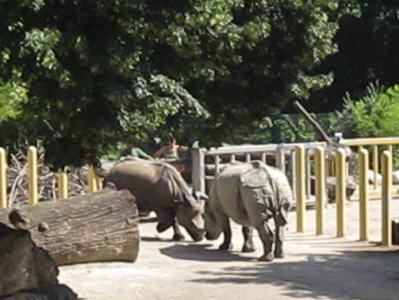 Sundari und Jange, 23. Juli 2009