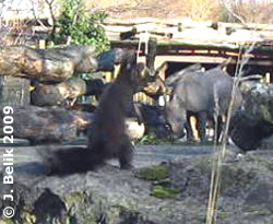 EIchkatzerl beim Nashorn-Park, im Hintergunrd Sundari, 26. Dezember 2009