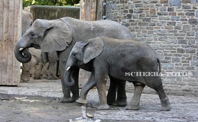 Kibo mit Mama Numbi im Zoo Wuppertal, Oktober 2009 (Foto: Barbara Scheer)