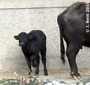 Die kleine Günni, schon ein Monat alt, 29. Jänner 2010