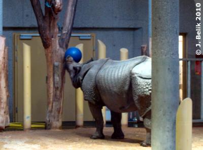 Jange und sein neues Spielzeug, 22. Jänner 2010