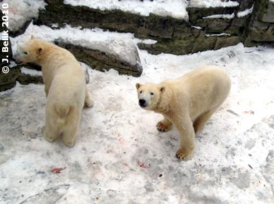 Nanuq und Arktos, 29. Jänner 2010