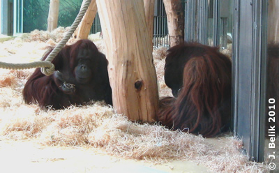 Nonja (li) und Vladi (re), 20. Jänner 2010