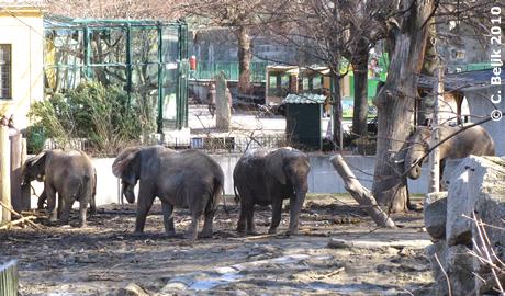 Die Elefanten im hinteren Teil der Außenanlage, 27. Februar 2010