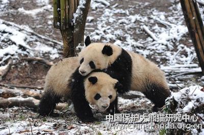 Fu Long mit Wu Jun, 16. Februar 2010, Bi Feng Xia