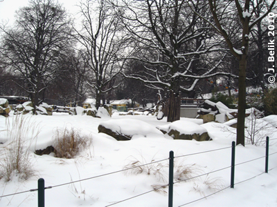 Der Nashornpark unter einer dicken Schneedecke, 12. Februar 2010