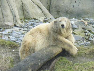 Tanja in der Außenanlage, 8. Februar 2010 (Foto: Zoo Rotterdam)