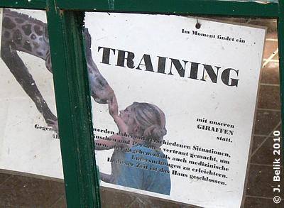 Die Giraffen sind gerade beim Medical Training, 19. März 2010