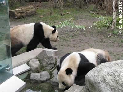 Yang Yang (li) und Long Hui (re), 28. März 2010