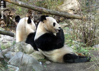 Long Hui (li) und Yang Yang (re), 19. März 2010