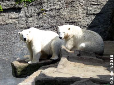 Arktos & Nanuq, 6. Mai 2010