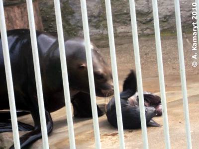 Enya mit Baby, 22. Mai 2010