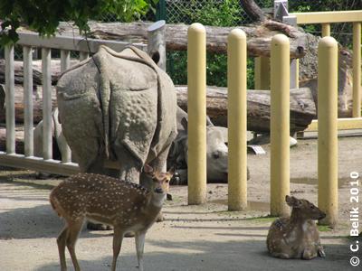 Jange (vorne) und Sundari (liegedn), 11. Mai 2010