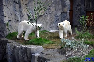 Arktos und Nanuq, 24. Mai 2010
