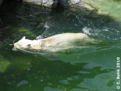 Nase unter Wasser ist lustig! Tania, 15. Juni 2010