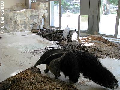 Ein weißer Pfau besucht Ilse, 29. Juli 2010