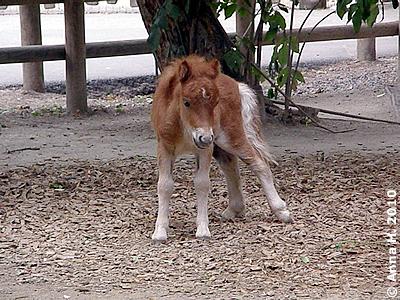 Pias Bay, 3 Wochen alt, 28. Juli 2010