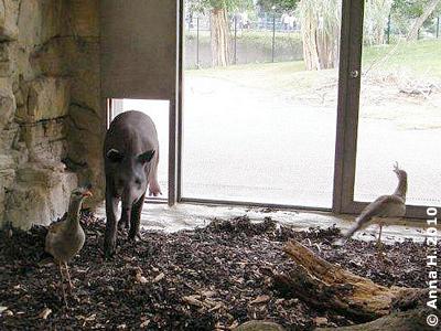 Da muss Tibor auch gleich kommen und schauen, wer bei den Ameisenbären zu Besuch ist, 18. Juli 2010