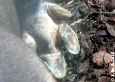 So sieht de Sohle eines Tapirs aus, 22. Juni 2010