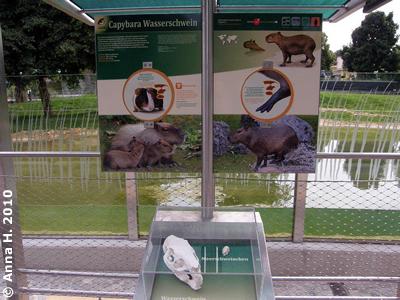 Hier kann man die Tiere auch Unterwasser beobachten, 10. Juni 2010