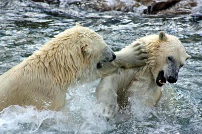 Arktos und Sprinter, 31. Juli 2010