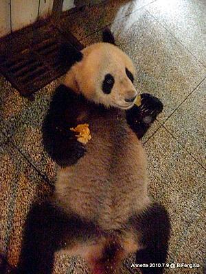 Fu Long in Bi Feng Xia, 9. Juli 2010
