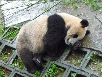 Pandamädchen, 9. Juli 2010
