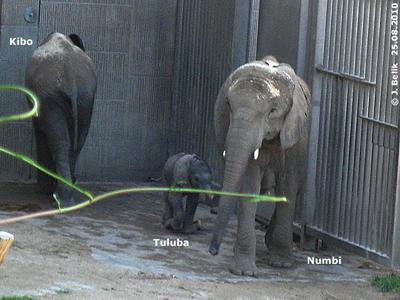 Kibo mit Mama und Brüderchen, 25. August 2010
