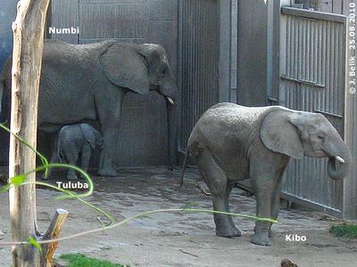 Kibo, Mama Numbi und Brüderchen Tuluba, 25. August 2010