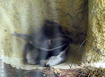 Emilia, noch ganz verschlafen, 5. August 2010