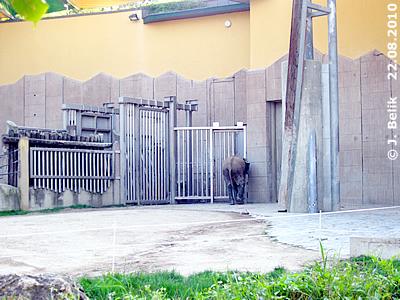 Kibo wollte auch hinein ..., 22. August 2010
