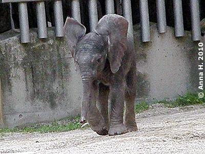 Mini-Eli, 14. August 2010