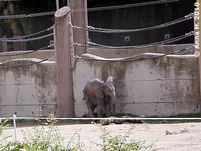 Hier sieht man gut, wie klein der Racker ist, Mini-Eli, 14. August 2010