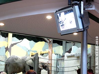 Ist man im Elis-Haus, sieht man trotzdem auch, was die anderen Elis machen, 2. September 2010