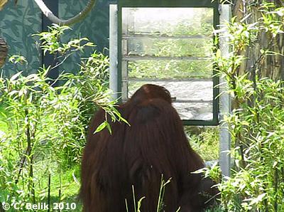 ... sorgt für stundenlange Beschäftigung der Tiere, 15. Juni 2010