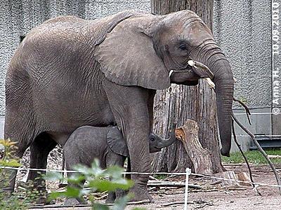 Numbi und ihr Mini-Eli, 1 Monat alt, 10. September 2010
