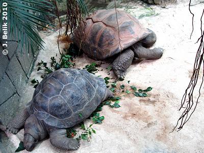 Riesenschildkröten, 16. September 2010
