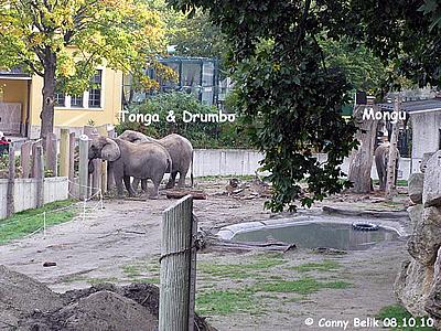 Zur selben Zeit am anderen Ende der Anlage die Wiener Elis ..., 8. Oktober 2010