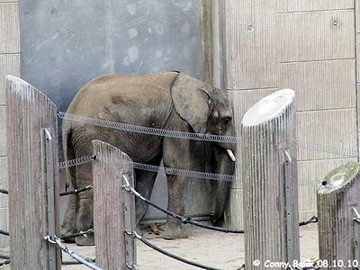 Armer Kibo, so sieht kein glückliches Elefantenkind aus! 8. Oktober 2010