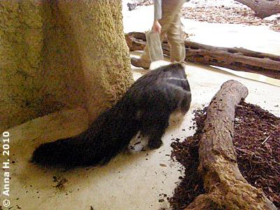 Silva wird von Emilias Ecke weg gelockt, 16. Oktober 2010